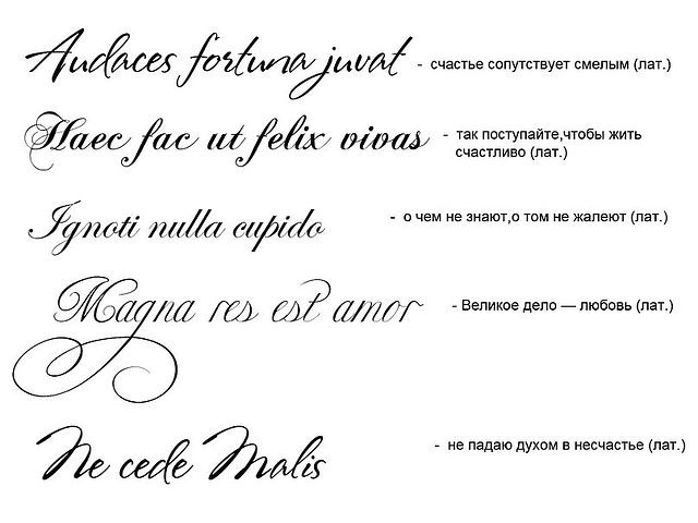 Картинки латинские слова тату